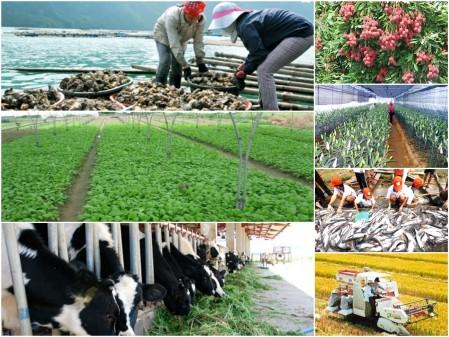 Câu hỏi khó cho nông nghiệp ảnh 1
