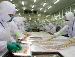 Mexico ngừng nhập khẩu tôm từ Việt Nam ảnh 1