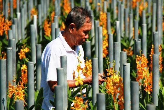 Quả ngọt nông nghiệp đô thị TPHCM ảnh 1
