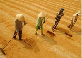 Đã ký hợp đồng xuất khẩu gần 4 triệu tấn gạo ảnh 1