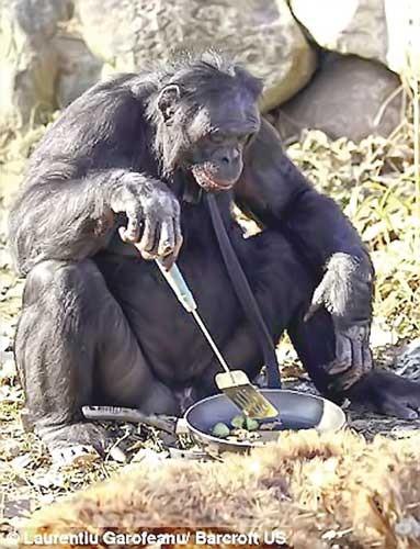 Năm Thân nói chuyện khỉ ảnh 4