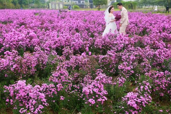 Ngỡ ngàng với thảo nguyên hoa đẹp như cổ tích ven sông Hồng ảnh 1