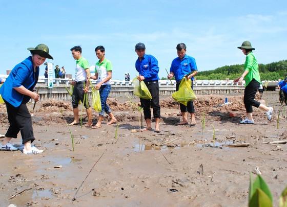Quỹ 1 triệu cây xanh cho Việt Nam đến Đất Mũi ảnh 1