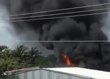 Cà Mau: Cháy lớn tại công ty thủy sản ảnh 1