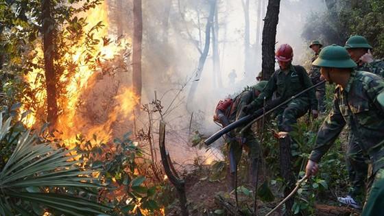 Thủ tướng yêu cầu cấp bách phòng cháy, chữa cháy rừng ảnh 2