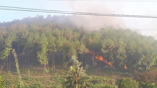 Thủ tướng yêu cầu cấp bách phòng cháy, chữa cháy rừng ảnh 1