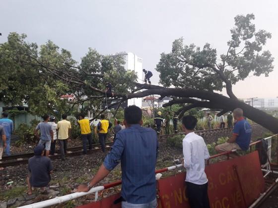 Gián đoạn giao thông vì cây to ngã chắn đường sắt Bắc Nam  ảnh 1