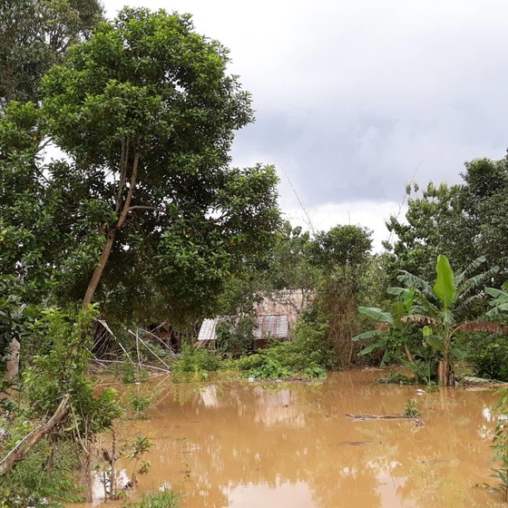 Lũ tiếp tục dâng, Đồng Nai di dời 1.200 hộ ven sông ảnh 1