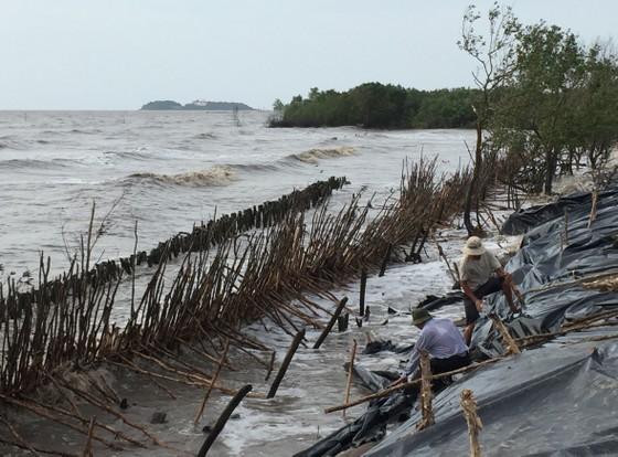 Cà Mau khẩn cấp đầu tư xây kè chắn sóng bờ biển Đông  ảnh 1