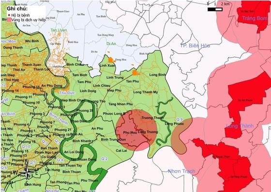 TPHCM phát hiện dịch tả heo châu Phi tại quận 9 ảnh 2
