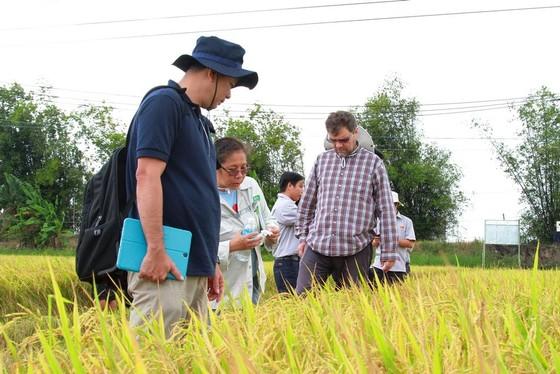 ĐBSCL giảm trồng lúa để phù hợp với biến đổi khí hậu ảnh 2