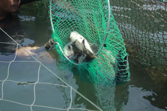Vụ cá chết hàng loạt ở Quảng Ngãi: Đã có kết luận mẫu nước ảnh 1