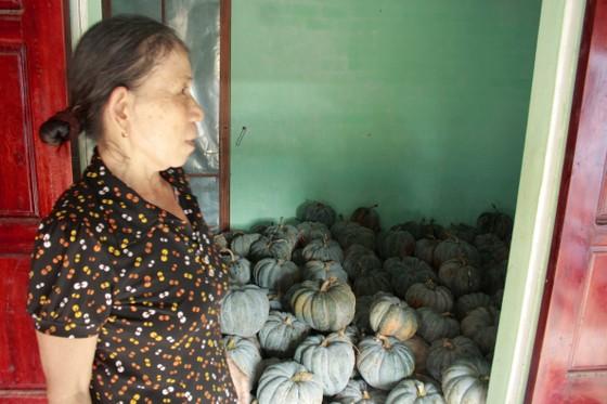Quảng Ngãi: Bí đỏ rớt giá còn 5.000 đồng/kg, nông dân lo lắng ảnh 1