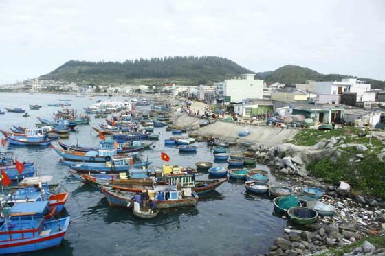 Ngư dân trồng hoa tết trên đảo Lý Sơn ảnh 1