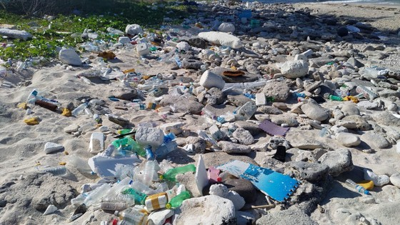 Lặn vớt rác dưới đáy biển Lý Sơn (Quảng Ngãi) ảnh 2