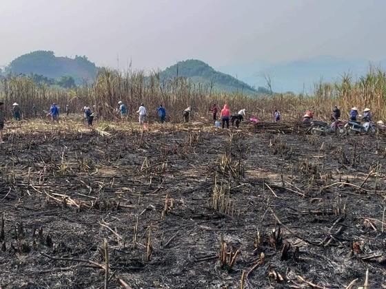Thanh niên giúp dân thu hoạch mía bị lửa thiêu rụi  ảnh 2