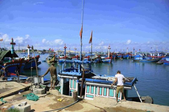 Khu vực neo đậu tàu thuyền của huyện đảo Lý Sơn