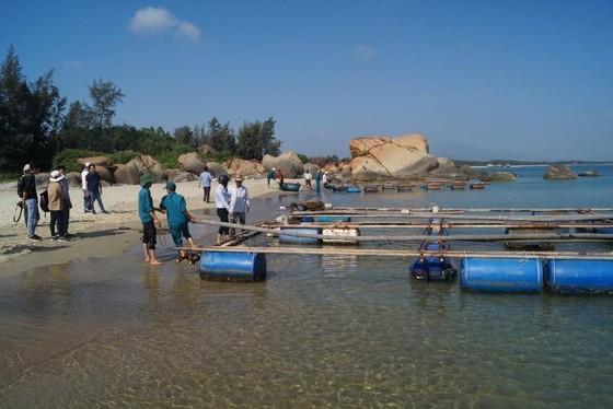 Quảng Ngãi: Chi hỗ trợ cho các hộ nuôi cá trong vùng biển Dung Quất ảnh 1