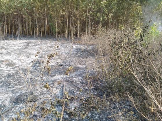 Lại xảy ra liên tiếp 2 vụ cháy rừng tại huyện Bình Sơn ảnh 1