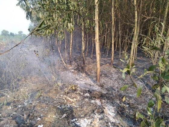 Lại xảy ra liên tiếp 2 vụ cháy rừng tại huyện Bình Sơn ảnh 3