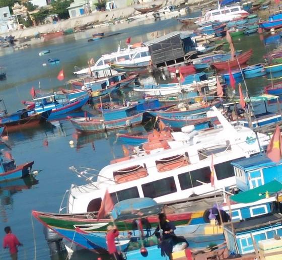 """Tàu siêu tốc """"lấn át"""" tàu cao tốc và cuộc đua đến đảo Lý Sơn (Quảng Ngãi) ảnh 3"""