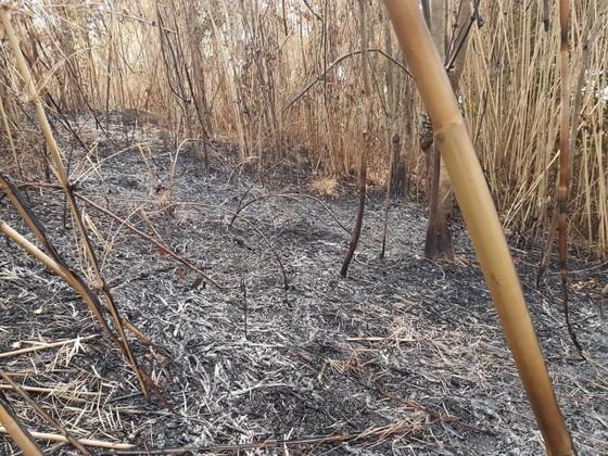 Quảng Ngãi: Cháy rừng giáp ranh giữa huyện Đức Phổ, Nghĩa Hành ảnh 1
