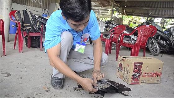 Bàn giao chim cổ rắn cực kì quý hiếm cho Thảo Cầm Viên Sài Gòn ảnh 1