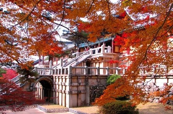 Thành phố Daegu và tỉnh Gyeongbuk quảng bá du lịch tại TPHCM ảnh 1