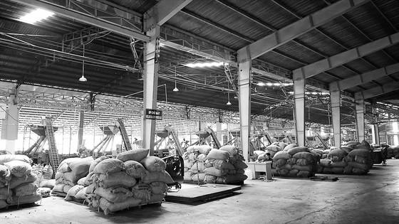 """Việt Nam và ngôi vị """"Vua hạt điều"""" thế giới - Bài 2: Cần chiến lược tăng giá trị hạt điều ảnh 2"""