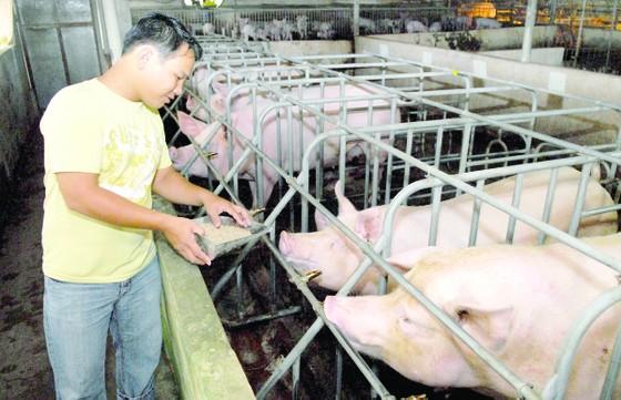 Tập trung xử lý chất thải trong chăn nuôi ảnh 1