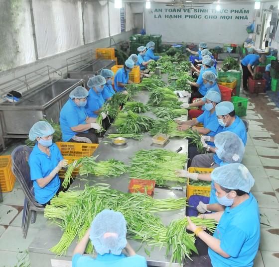 Vai trò liên kết trong sản xuất nông nghiệp công nghệ cao ảnh 1