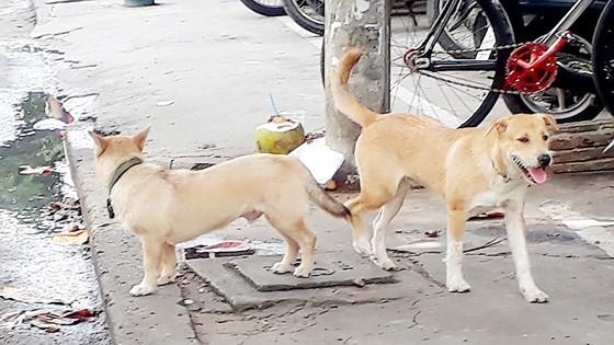 Kiểm soát chặt việc nuôi chó trong khu dân cư ảnh 1