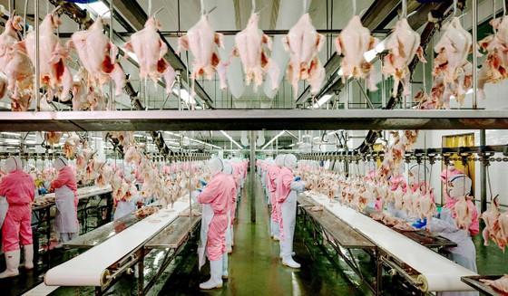 Triển lãm quốc tế về công nghiệp chế biến, đóng gói, bảo quản nông sản và thực phẩm-Vietnam PFA 2019 ảnh 1
