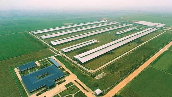 Vinamilk nhập hơn 1.600 con bò sữa HF và A2 từ Mỹ ảnh 1