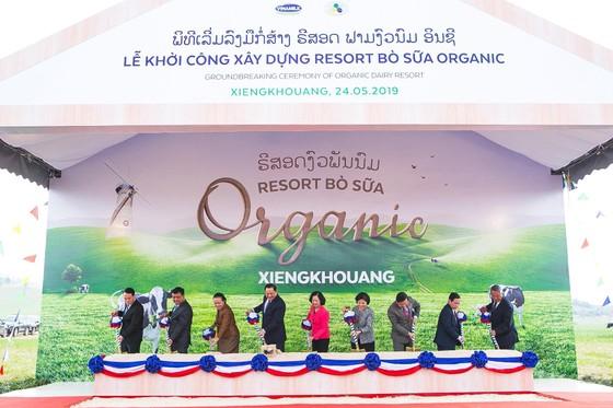 """Vinamilk khởi công xây dựng tổ hợp """"resort"""" bò sữa organic tại Lào ảnh 1"""