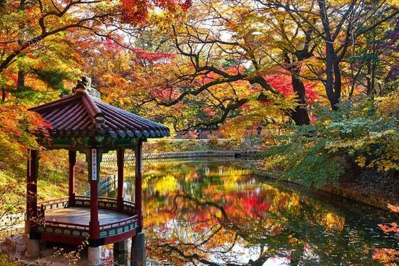 Hàn Quốc tổ chức Tuần lễ chào đón khách du lịch Việt Nam ảnh 2
