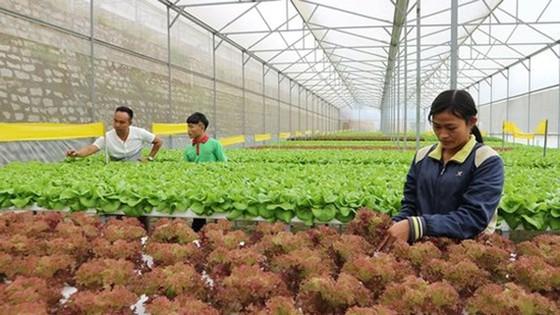 Lãnh thổ Đài Loan đầu tư mạnh tại Việt Nam  ảnh 1