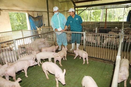 Việt Nam thắt chặt nhập khẩu thịt heo  ảnh 1
