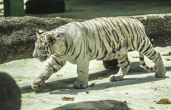 西貢動物園 —— 市民假日好去處 ảnh 3