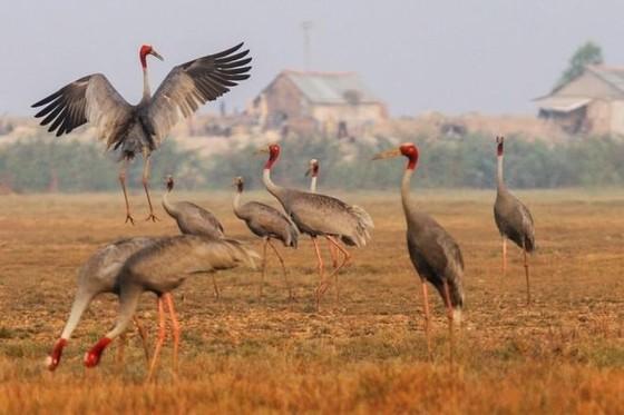 來鳥棲國家公園探索同塔梅美景 ảnh 1