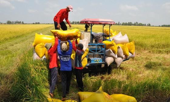 打造無公害有機農業 ảnh 1