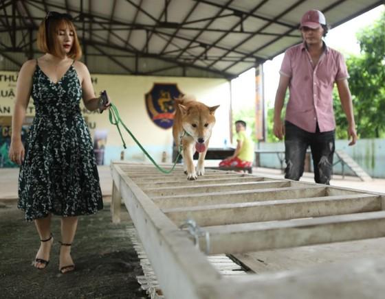 Tìm được 'diễn viên 4 chân' cho dự án điện ảnh Cậu Vàng ảnh 3