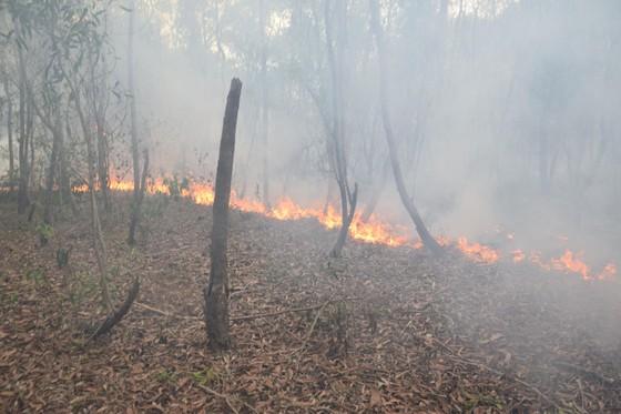 Đến lượt rừng keo ở Quảng Nam bốc cháy dữ dội ảnh 1