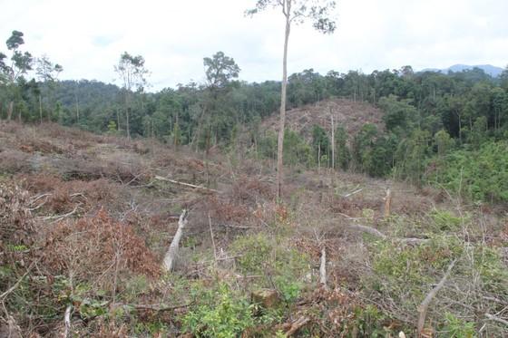 Khởi tố 4 bị can trong vụ phá rừng tự nhiên quy mô lớn tại Lâm Đồng ảnh 4