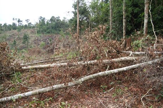 Khởi tố 4 bị can trong vụ phá rừng tự nhiên quy mô lớn tại Lâm Đồng ảnh 3