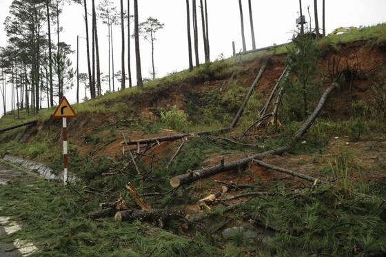 Lâm Đồng tan hoang sau bão 12 ảnh 11
