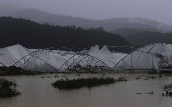 Lâm Đồng tan hoang sau bão 12 ảnh 8