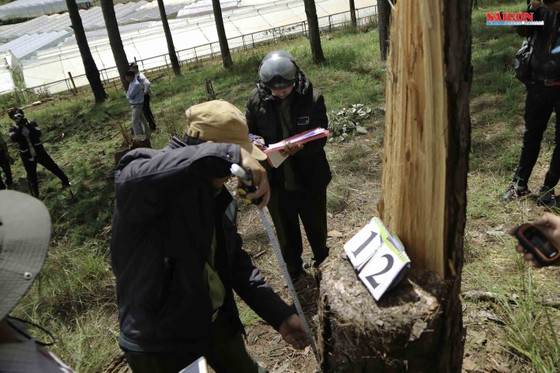Xử phạt 3 đối tượng phá rừng thông hơn 40 năm tuổi ở Đà Lạt ảnh 3