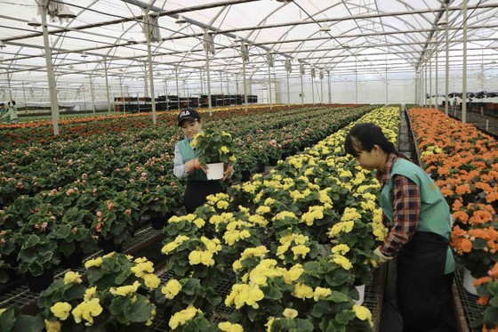 Hà Lan hỗ trợ Lâm Đồng phát triển nông nghiệp bền vững ảnh 1