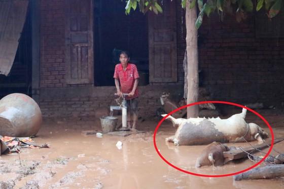 Môi trường tại khu vực vỡ đập thủy điện ở Lào đứng trước nguy cơ ô nhiễm ảnh 1